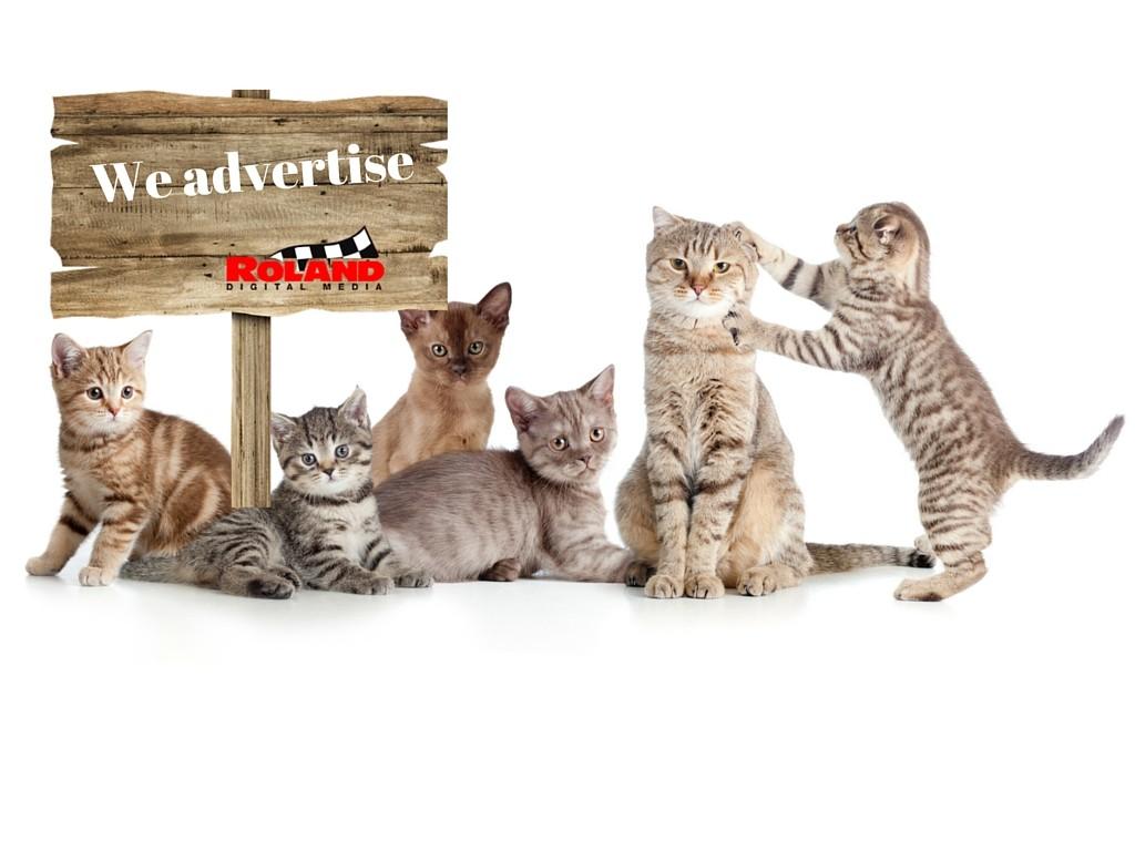 catvertise